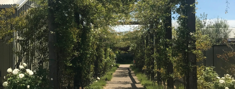 The Arbor Walk at Carneros Resort